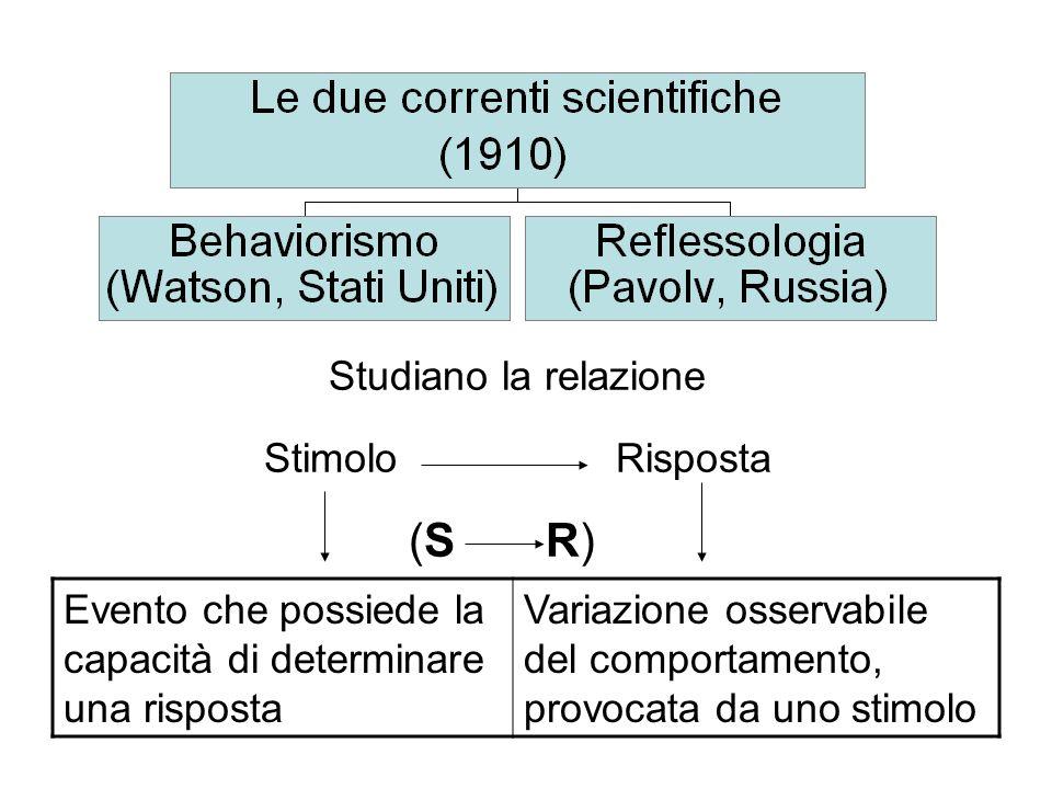 Studiano la relazione Stimolo Risposta (S R)