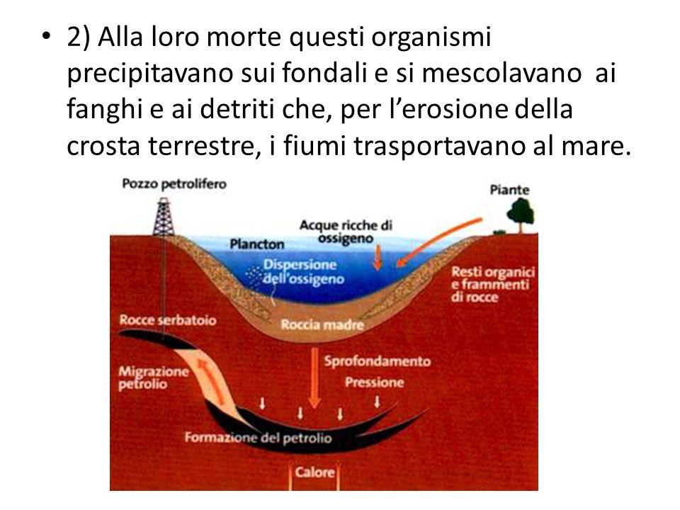 2) Alla loro morte questi organismi precipitavano sui fondali e si mescolavano ai fanghi e ai detriti che, per l'erosione della crosta terrestre, i fiumi trasportavano al mare.