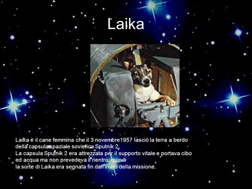 Laika Laika è il cane femmina che il 3 novembre1957 lasciò la terra a bordo. della capsula spaziale sovietica Sputnik 2.