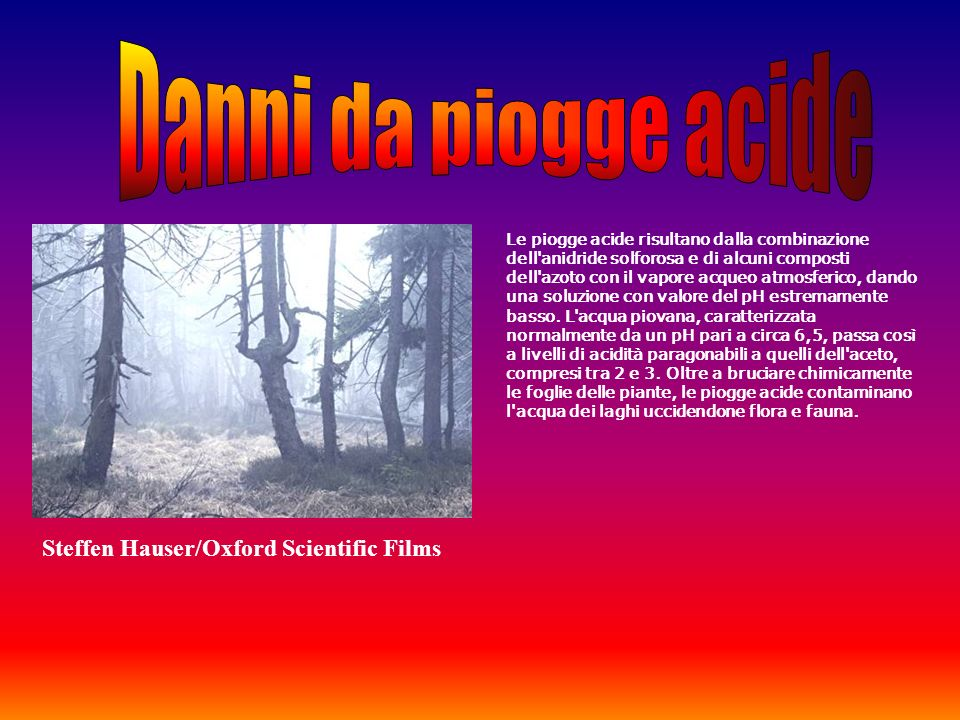 Danni da piogge acide Steffen Hauser/Oxford Scientific Films