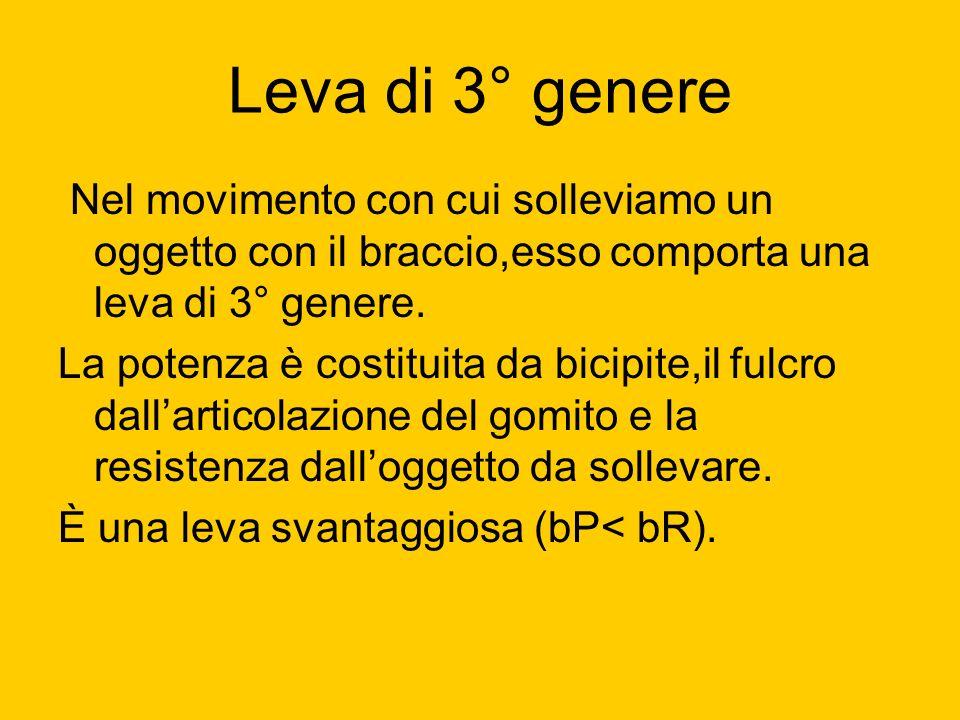 Leva di 3° genere Nel movimento con cui solleviamo un oggetto con il braccio,esso comporta una leva di 3° genere.
