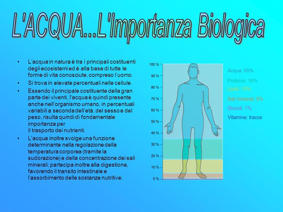 L ACQUA...L Importanza Biologica L ACQUA...L Importanza Biologica