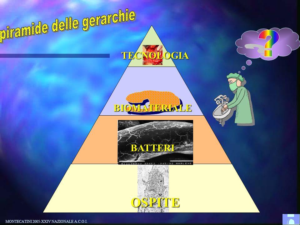 piramide delle gerarchie