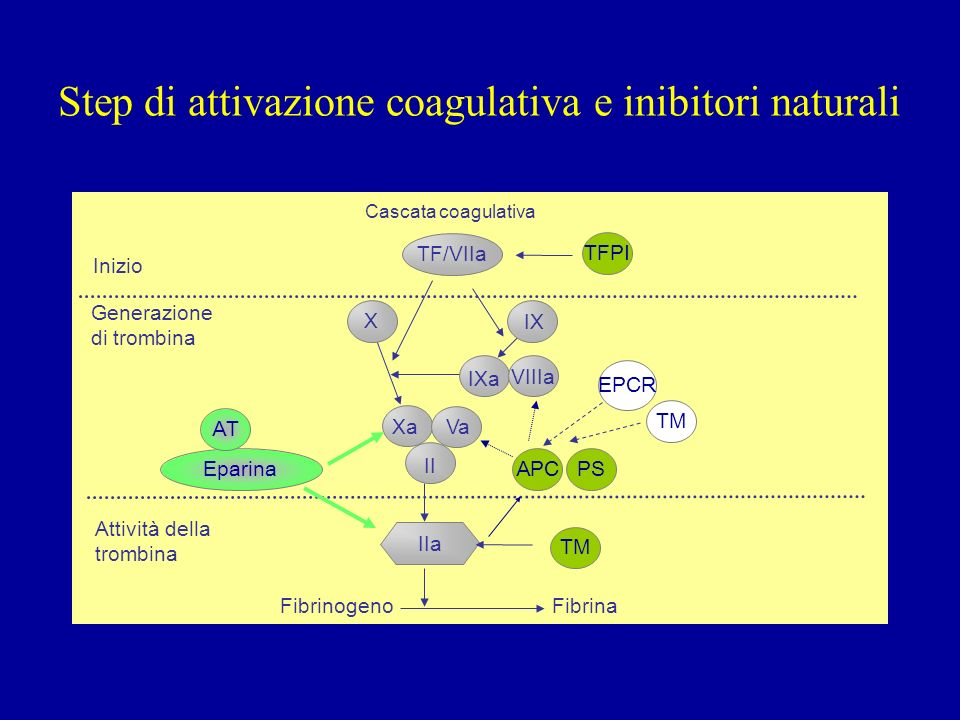 Step di attivazione coagulativa e inibitori naturali