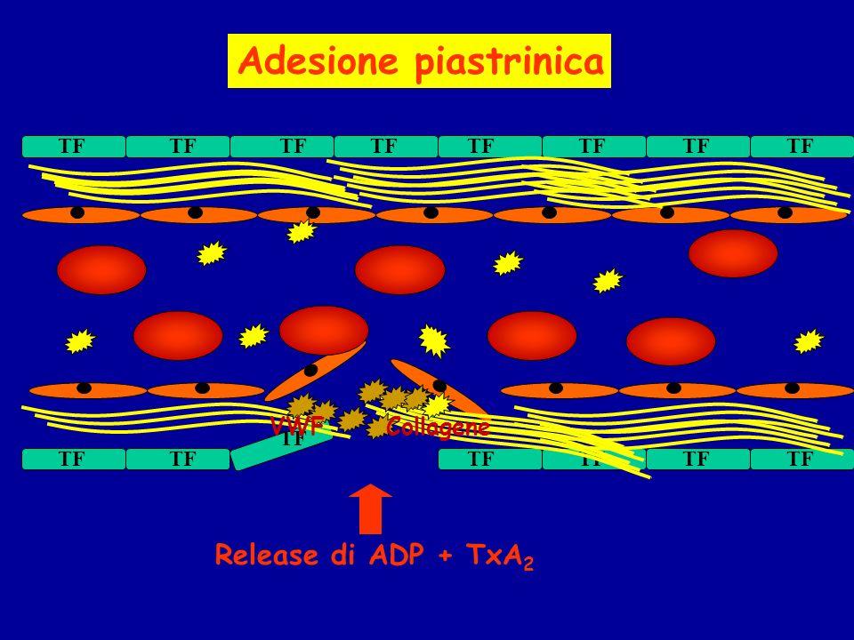 Adesione piastrinica Release di ADP + TxA2 VWF Collagene TF TF TF TF