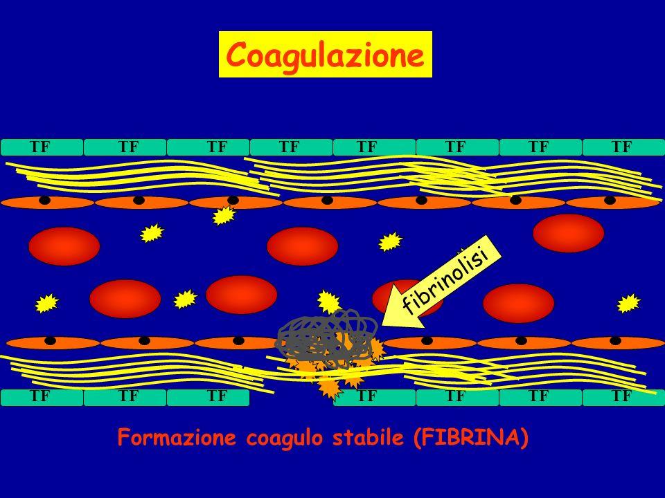 Coagulazione fibrinolisi Formazione coagulo stabile (FIBRINA) TF TF TF