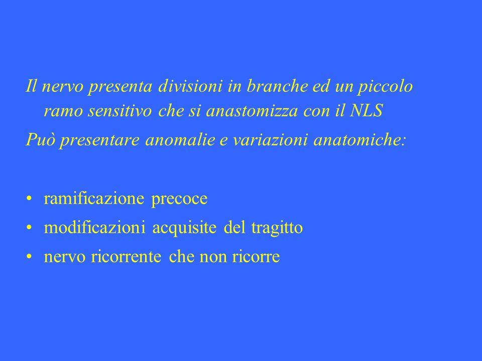 Il nervo presenta divisioni in branche ed un piccolo ramo sensitivo che si anastomizza con il NLS