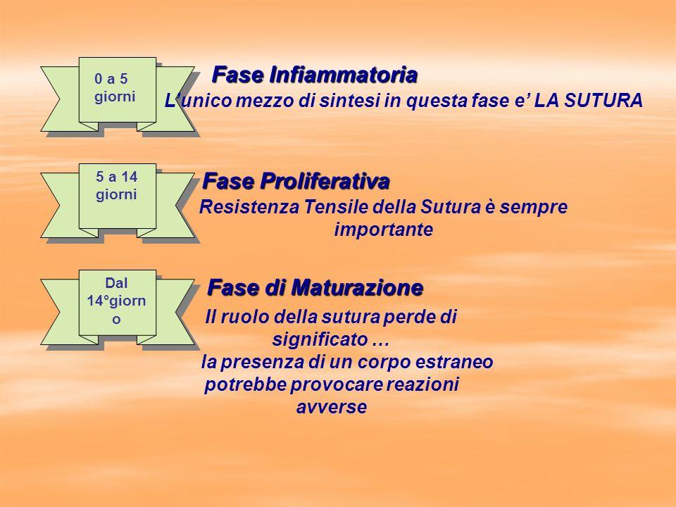 Fase Infiammatoria Fase Proliferativa Fase di Maturazione