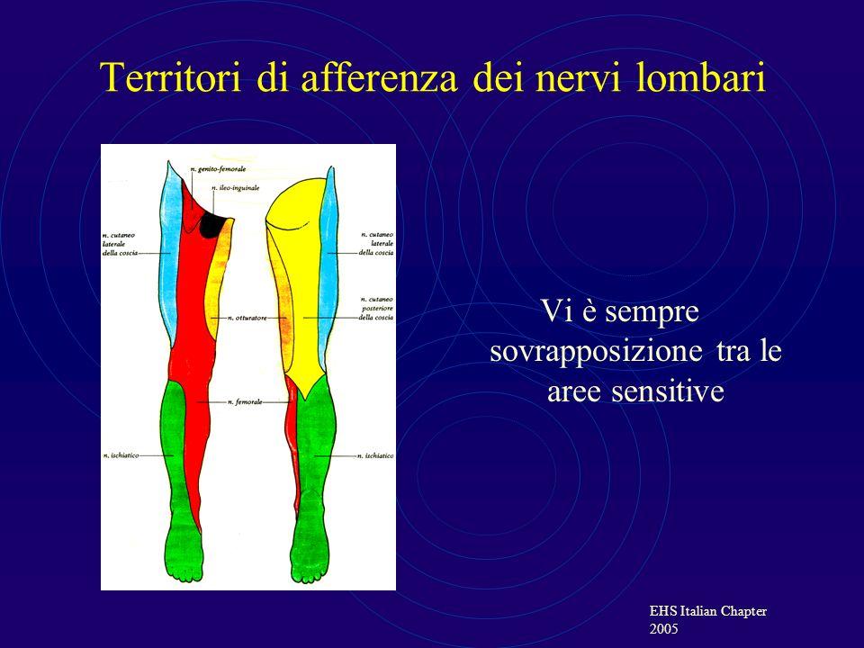 Territori di afferenza dei nervi lombari
