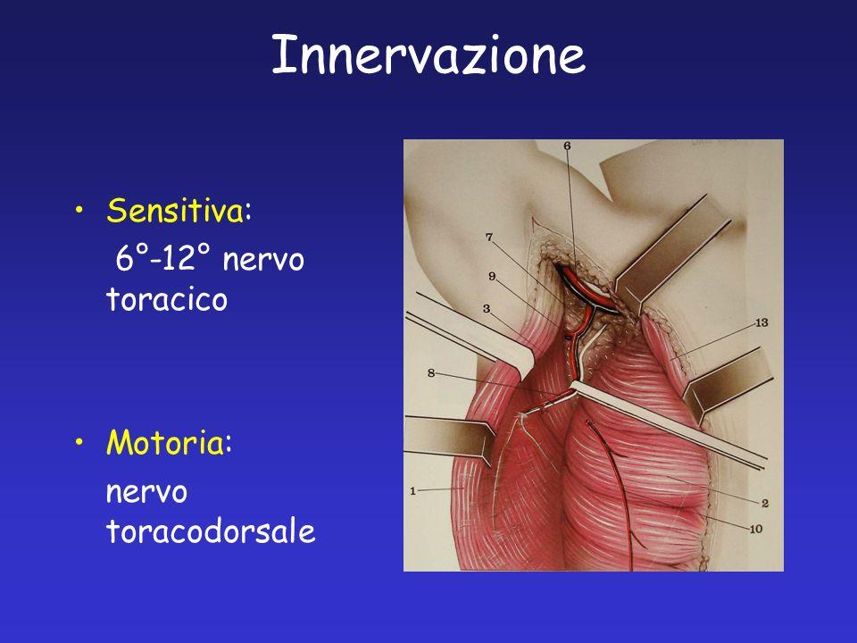Innervazione Sensitiva: 6°-12° nervo toracico Motoria: