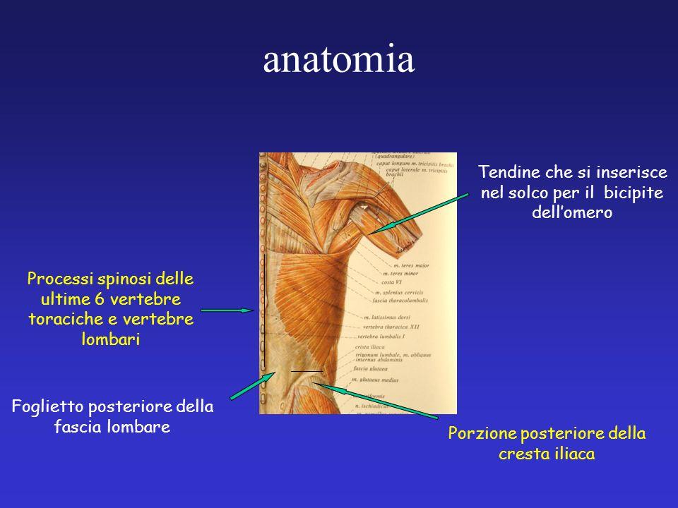anatomia Tendine che si inserisce nel solco per il bicipite dell'omero
