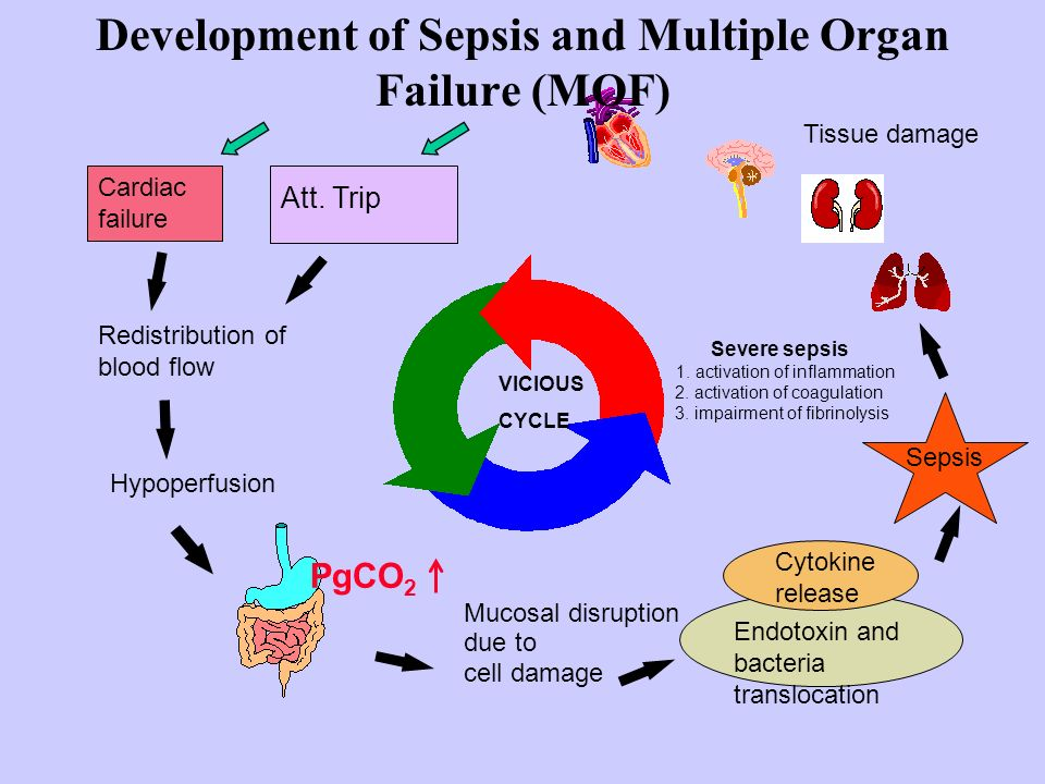 Development of Sepsis and Multiple Organ Failure (MOF)