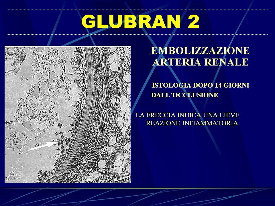 GLUBRAN 2 EMBOLIZZAZIONE ARTERIA RENALE ISTOLOGIA DOPO 14 GIORNI