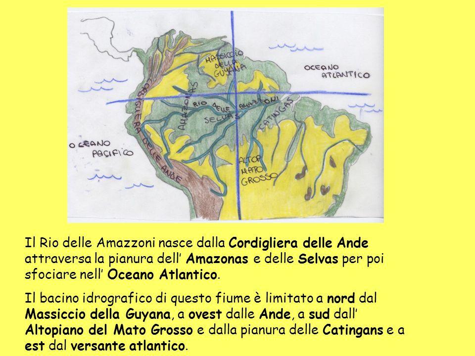 Il Rio delle Amazzoni nasce dalla Cordigliera delle Ande attraversa la pianura dell' Amazonas e delle Selvas per poi sfociare nell' Oceano Atlantico.