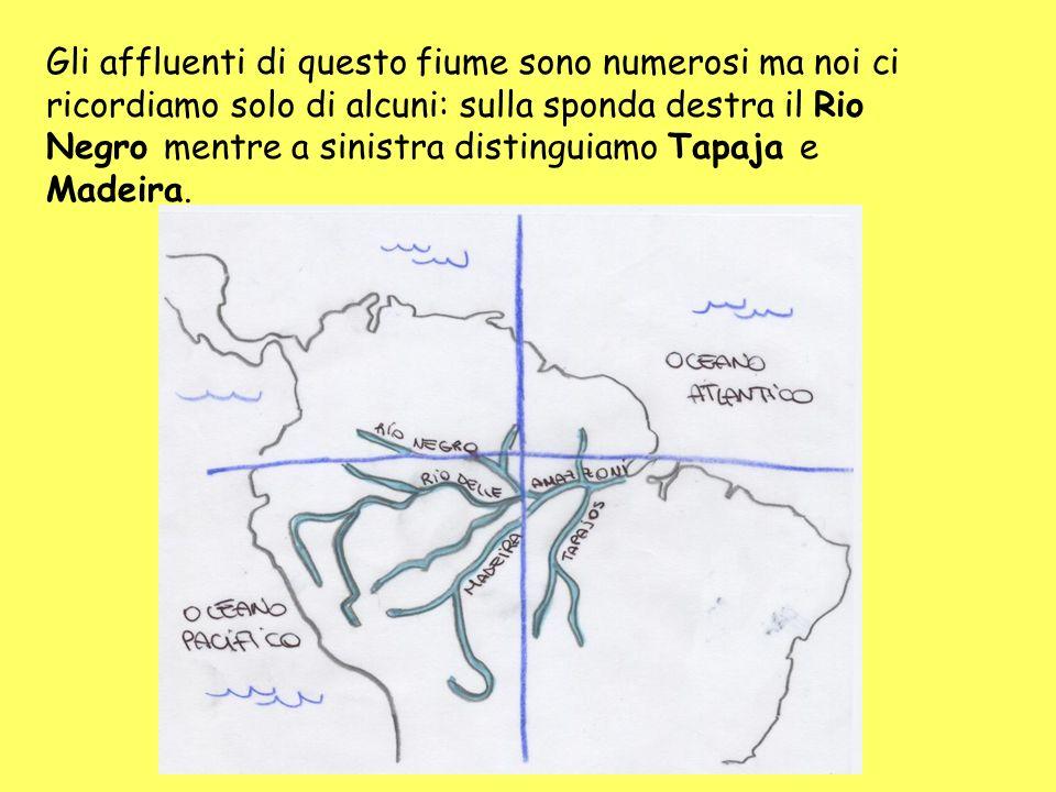 Gli affluenti di questo fiume sono numerosi ma noi ci ricordiamo solo di alcuni: sulla sponda destra il Rio Negro mentre a sinistra distinguiamo Tapaja e Madeira.