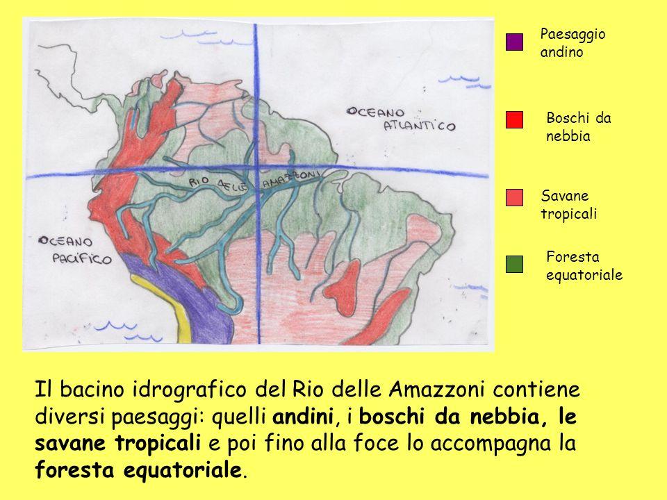 Paesaggio andino Boschi da nebbia. Savane tropicali. Foresta equatoriale.