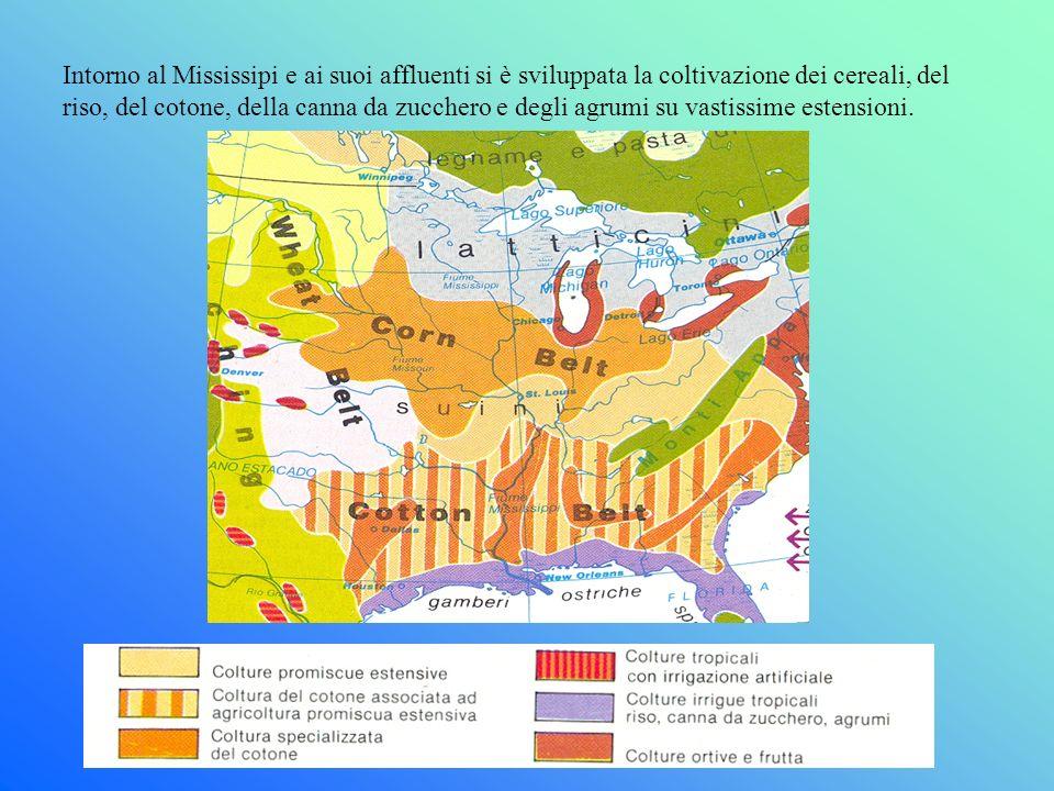 Intorno al Mississipi e ai suoi affluenti si è sviluppata la coltivazione dei cereali, del riso, del cotone, della canna da zucchero e degli agrumi su vastissime estensioni.