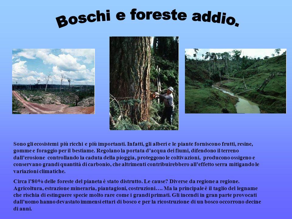 Boschi e foreste addio.