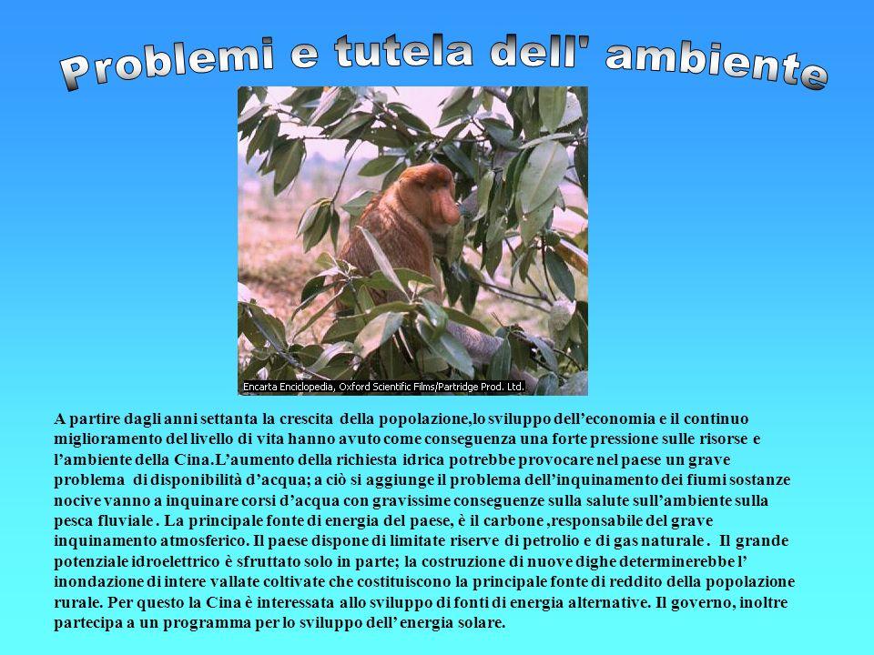 Problemi e tutela dell ambiente