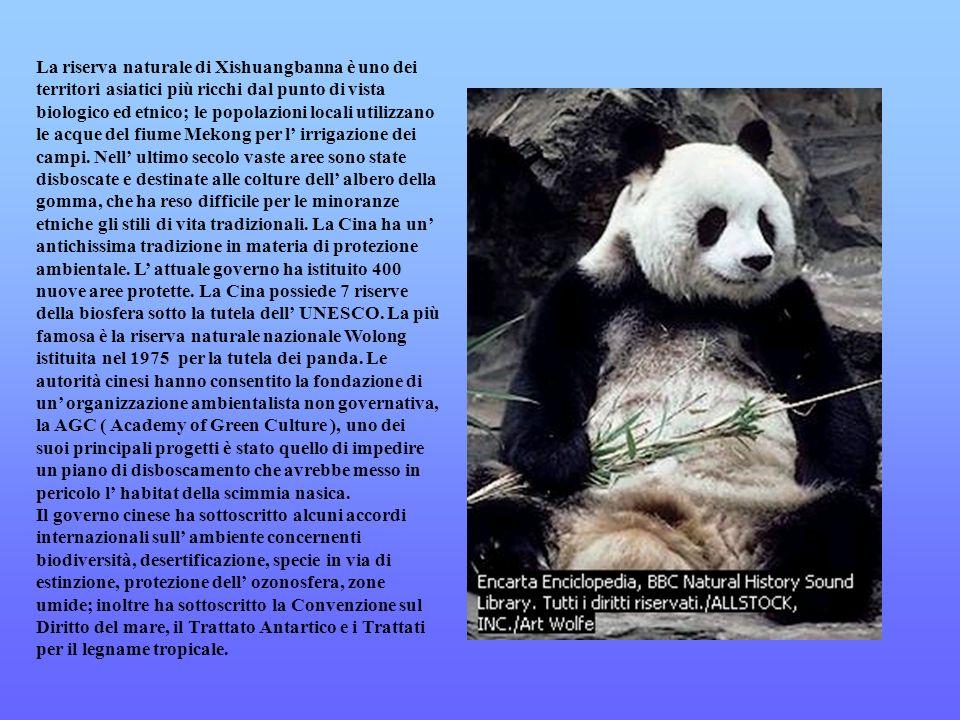 La riserva naturale di Xishuangbanna è uno dei territori asiatici più ricchi dal punto di vista biologico ed etnico; le popolazioni locali utilizzano le acque del fiume Mekong per l' irrigazione dei campi. Nell' ultimo secolo vaste aree sono state disboscate e destinate alle colture dell' albero della gomma, che ha reso difficile per le minoranze etniche gli stili di vita tradizionali. La Cina ha un' antichissima tradizione in materia di protezione ambientale. L' attuale governo ha istituito 400 nuove aree protette. La Cina possiede 7 riserve della biosfera sotto la tutela dell' UNESCO. La più famosa è la riserva naturale nazionale Wolong istituita nel 1975 per la tutela dei panda. Le autorità cinesi hanno consentito la fondazione di un' organizzazione ambientalista non governativa, la AGC ( Academy of Green Culture ), uno dei suoi principali progetti è stato quello di impedire un piano di disboscamento che avrebbe messo in pericolo l' habitat della scimmia nasica.