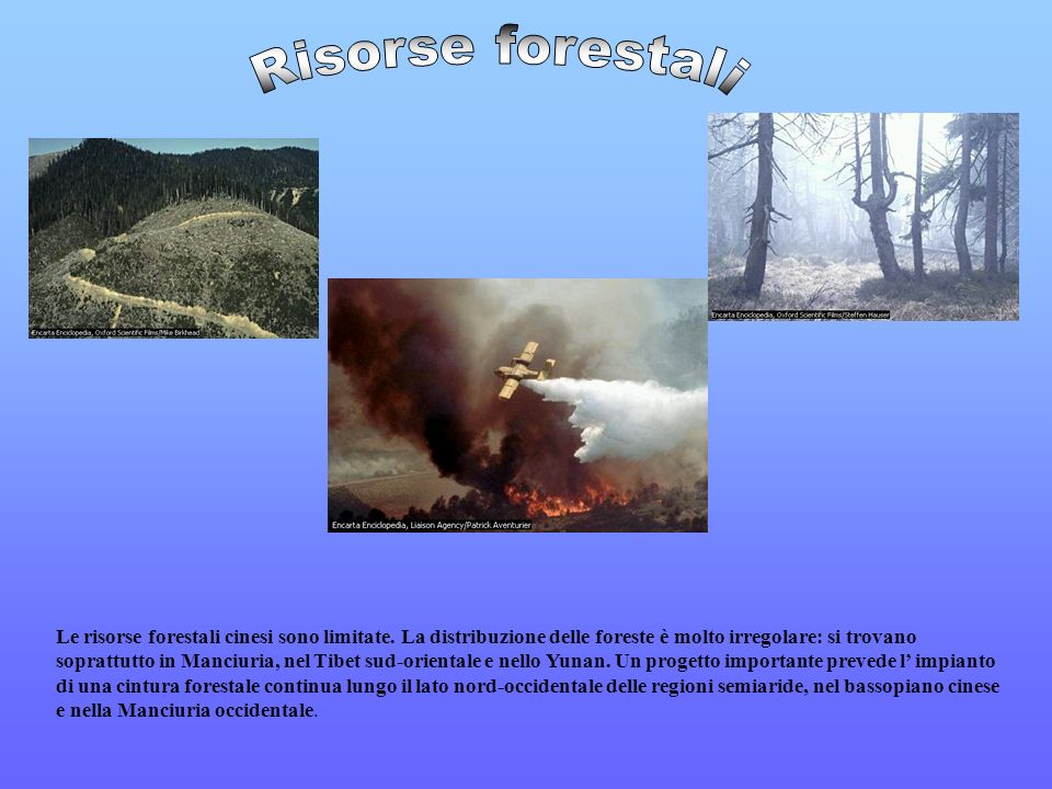 Risorse forestali