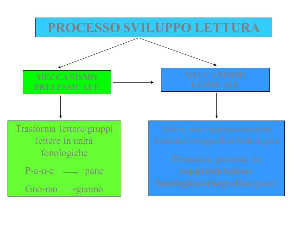 PROCESSO SVILUPPO LETTURA MECCANISMO PRELESSICALE