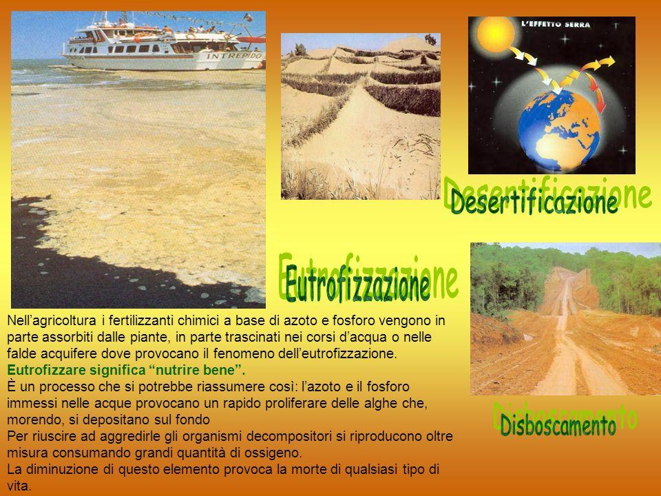 Desertificazione Eutrofizzazione Disboscamento