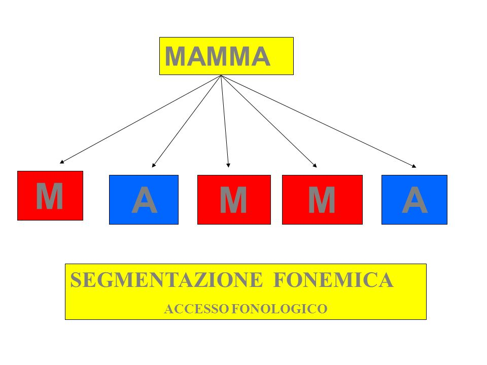 MAMMA M A M M A SEGMENTAZIONE FONEMICA ACCESSO FONOLOGICO