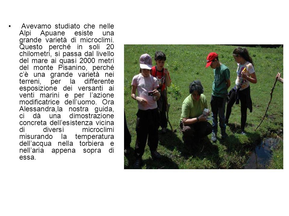 Avevamo studiato che nelle Alpi Apuane esiste una grande varietà di microclimi.