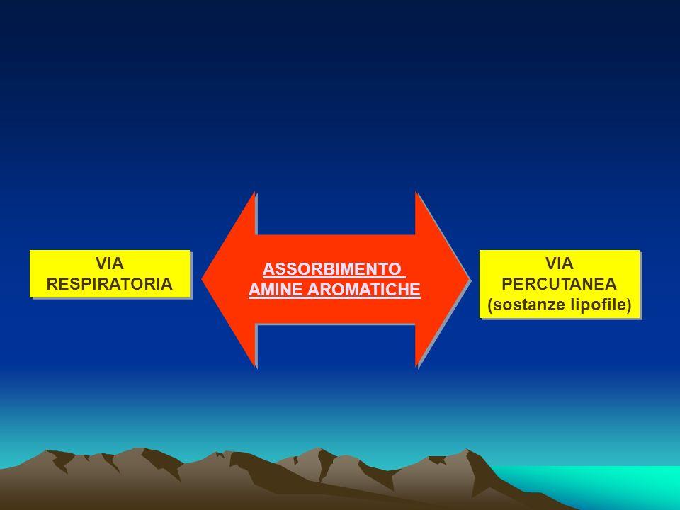 ASSORBIMENTO AMINE AROMATICHE VIA RESPIRATORIA VIA PERCUTANEA (sostanze lipofile)