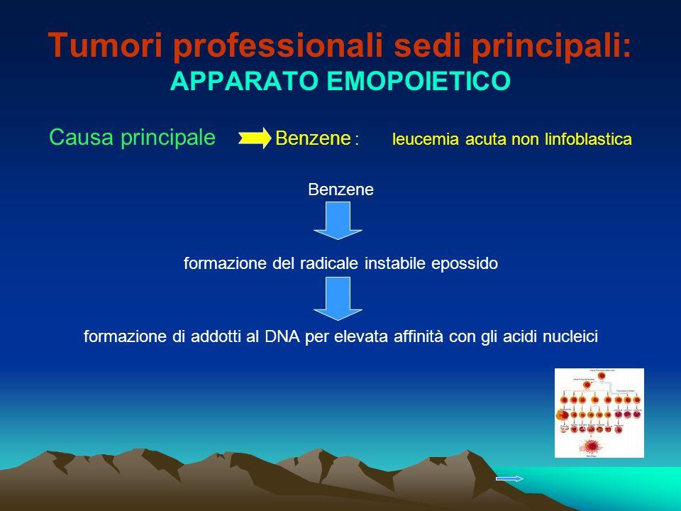 Tumori professionali sedi principali: APPARATO EMOPOIETICO