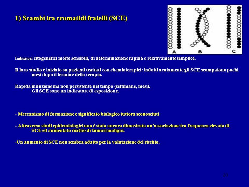 1) Scambi tra cromatidi fratelli (SCE)