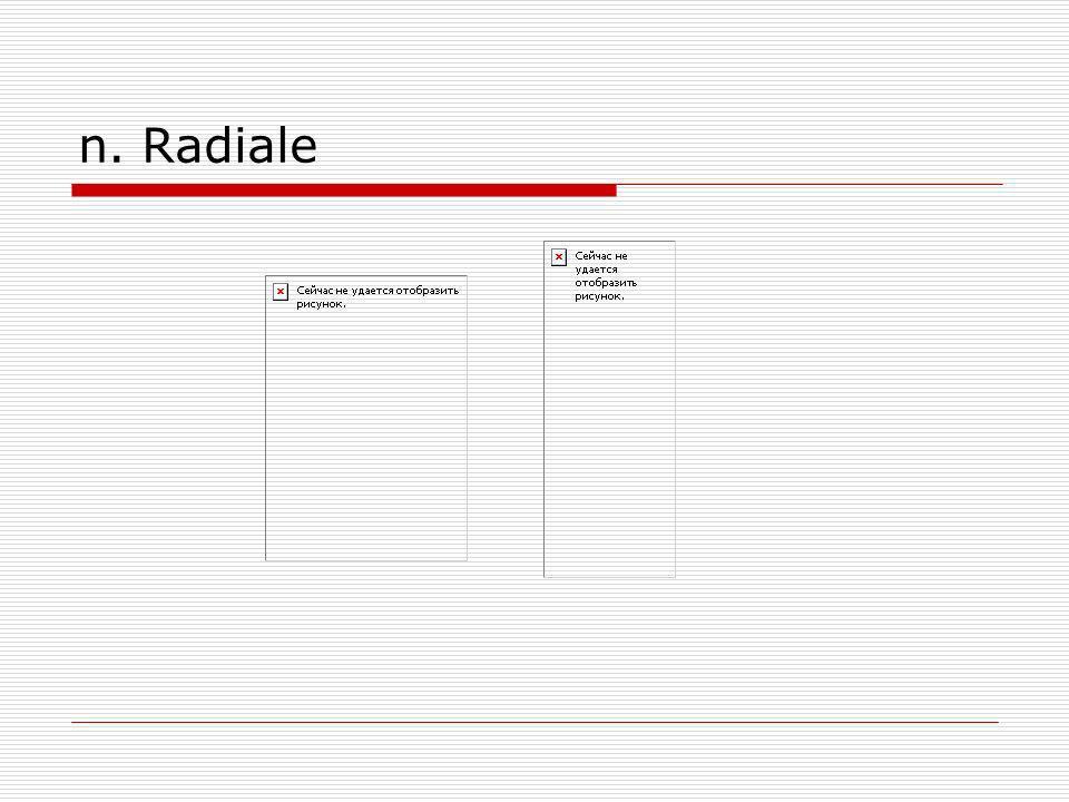 n. Radiale