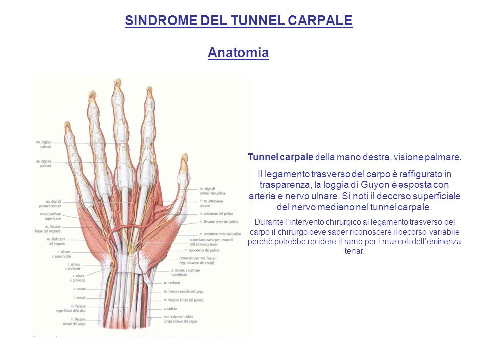SINDROME DEL TUNNEL CARPALE Anatomia