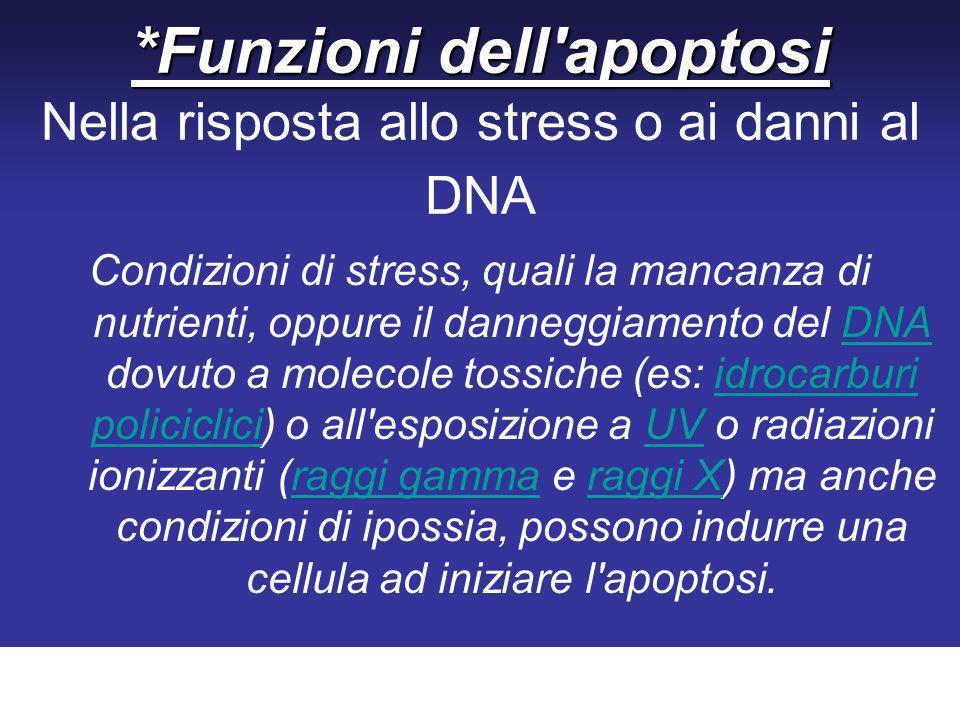 *Funzioni dell apoptosi Nella risposta allo stress o ai danni al DNA