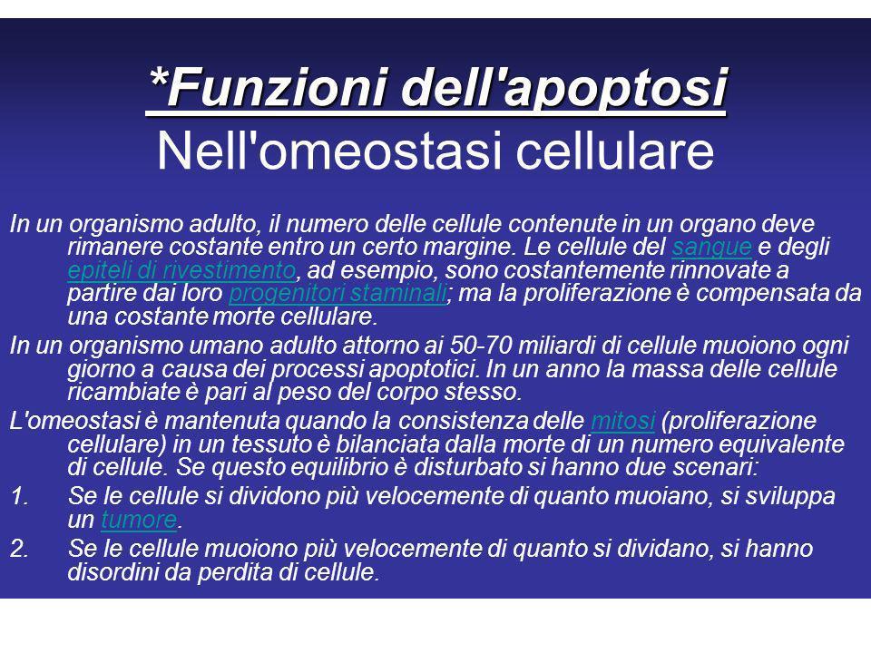 *Funzioni dell apoptosi Nell omeostasi cellulare