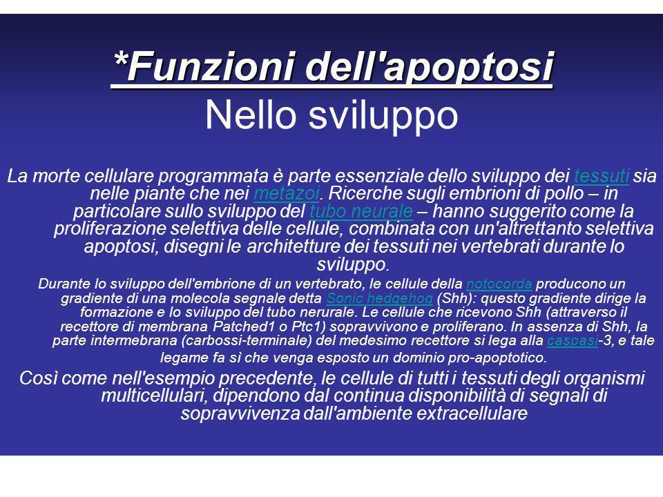 *Funzioni dell apoptosi Nello sviluppo