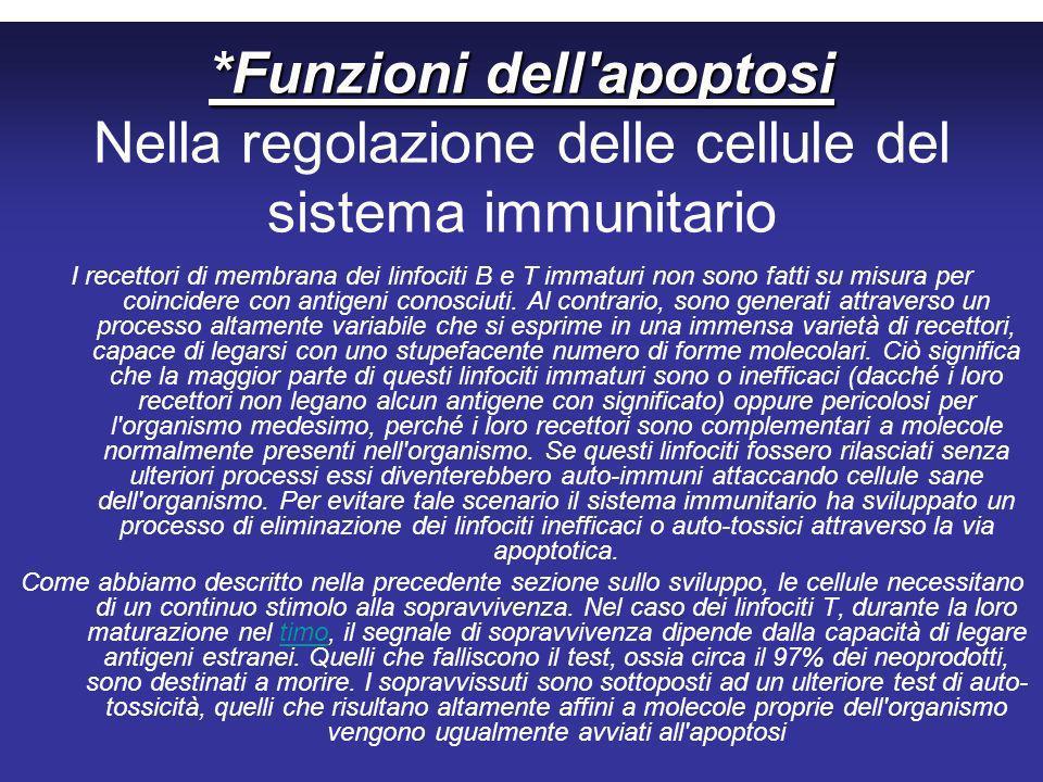 *Funzioni dell apoptosi Nella regolazione delle cellule del sistema immunitario
