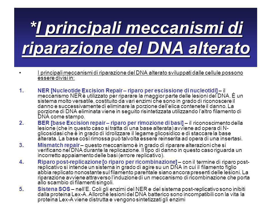 *I principali meccanismi di riparazione del DNA alterato