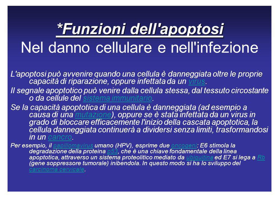 *Funzioni dell apoptosi Nel danno cellulare e nell infezione