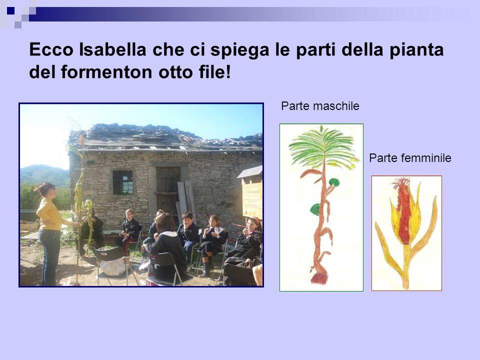 Ecco Isabella che ci spiega le parti della pianta del formenton otto file!