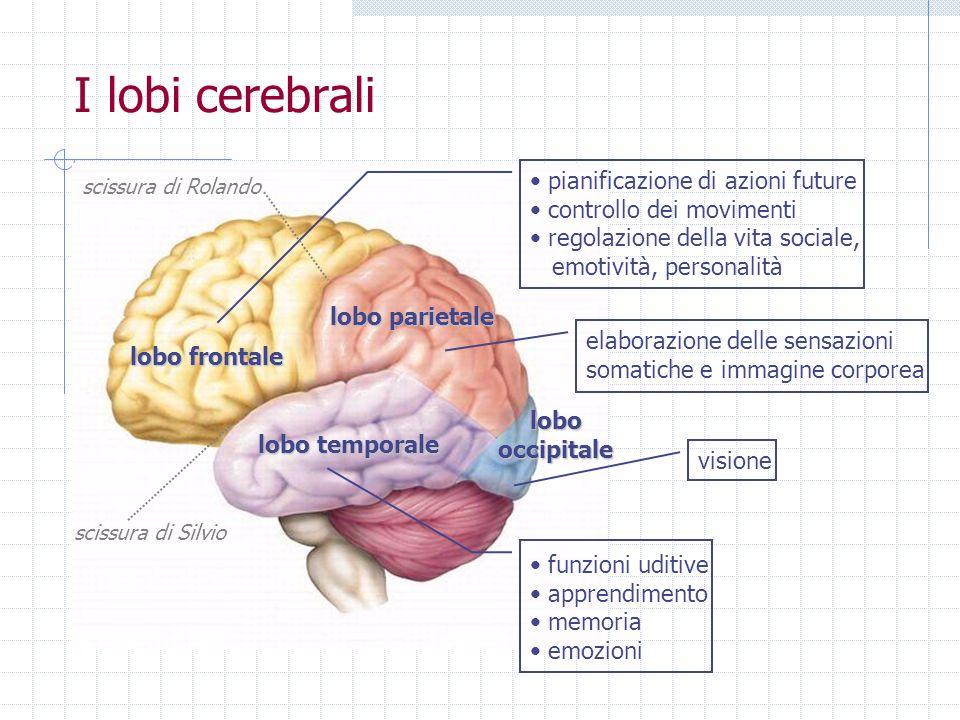 I lobi cerebrali pianificazione di azioni future