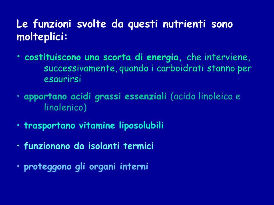 Le funzioni svolte da questi nutrienti sono molteplici: