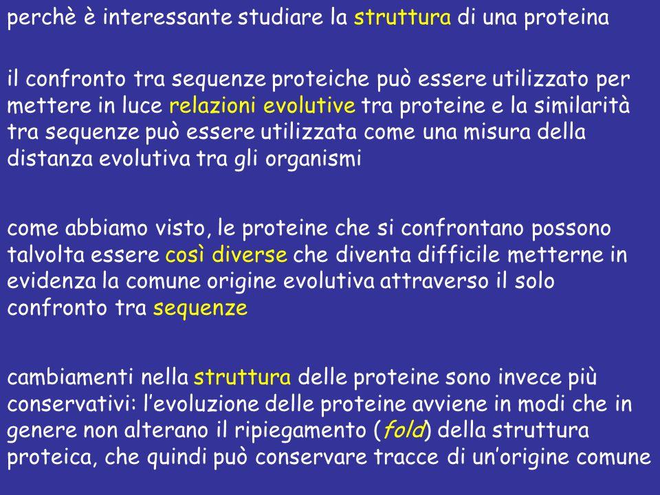 perchè è interessante studiare la struttura di una proteina