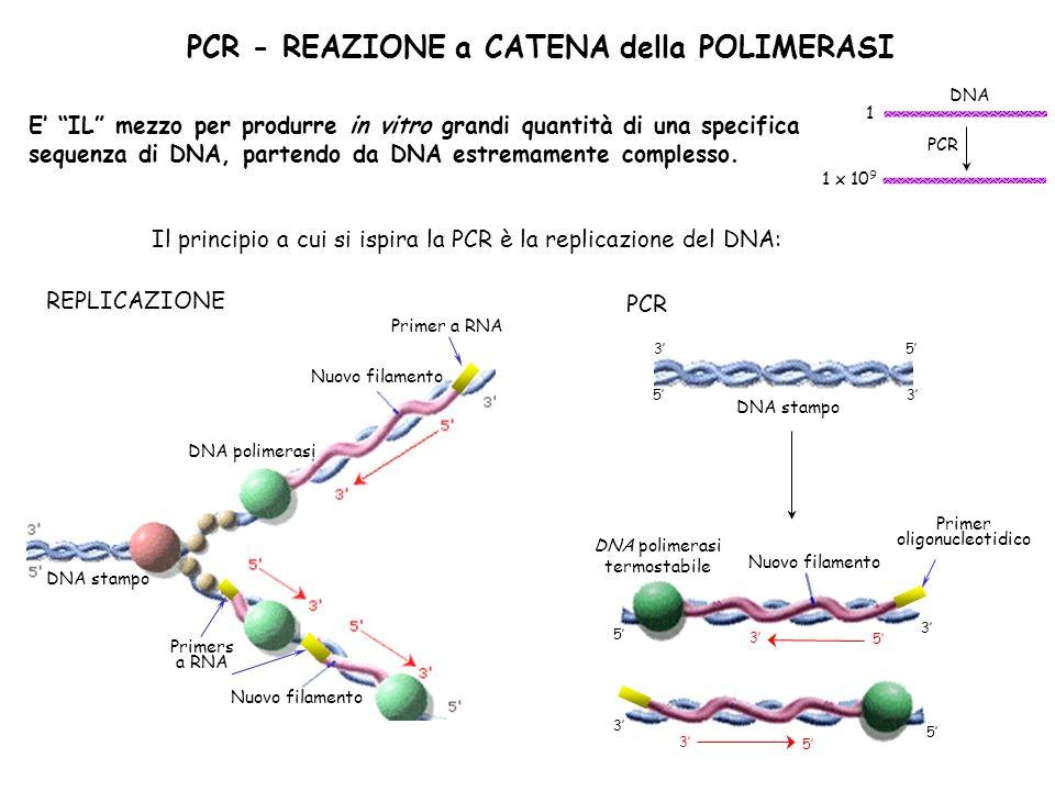 PCR - REAZIONE a CATENA della POLIMERASI