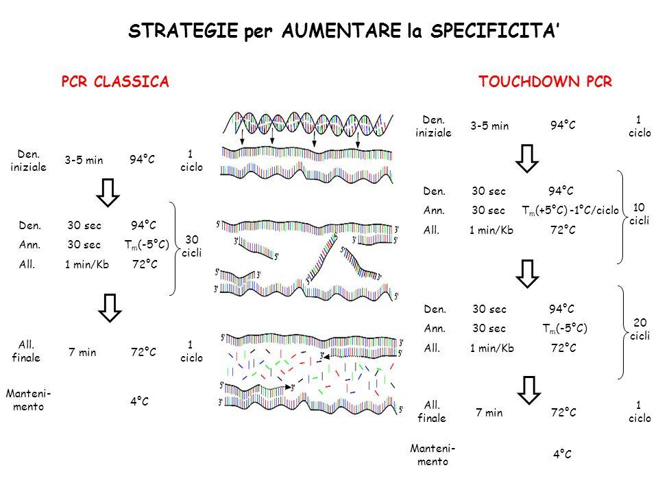 STRATEGIE per AUMENTARE la SPECIFICITA' TOUCHDOWN PCR PCR CLASSICA