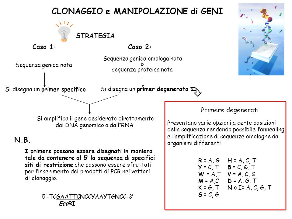  CLONAGGIO e MANIPOLAZIONE di GENI N.B. STRATEGIA Caso 1: Caso 2: