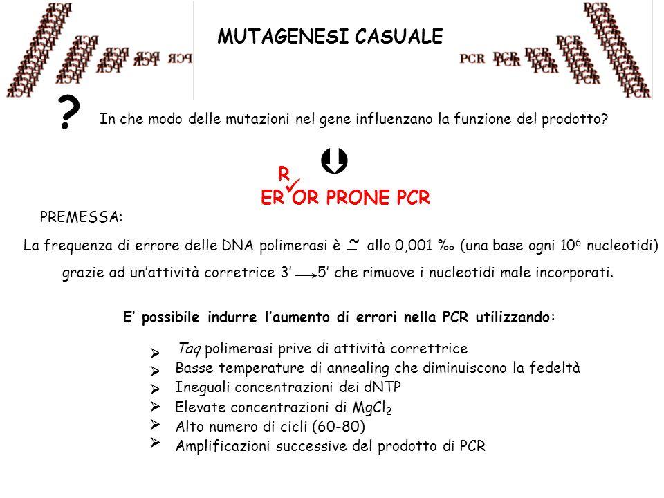   MUTAGENESI CASUALE R ER OR PRONE PCR ~