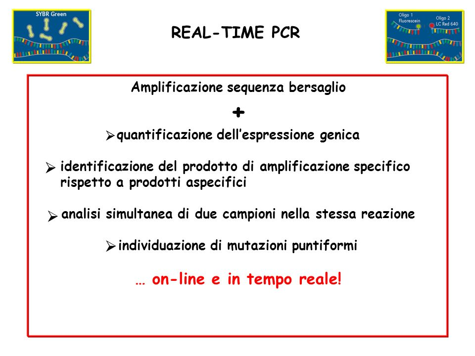+ REAL-TIME PCR … on-line e in tempo reale!