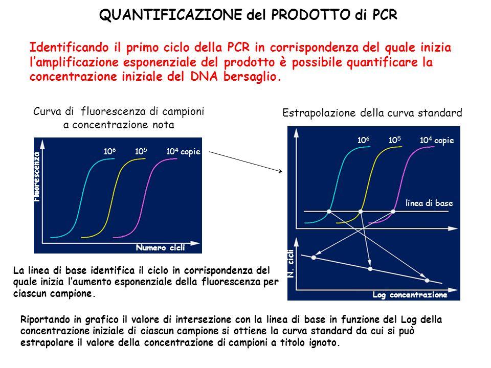 QUANTIFICAZIONE del PRODOTTO di PCR